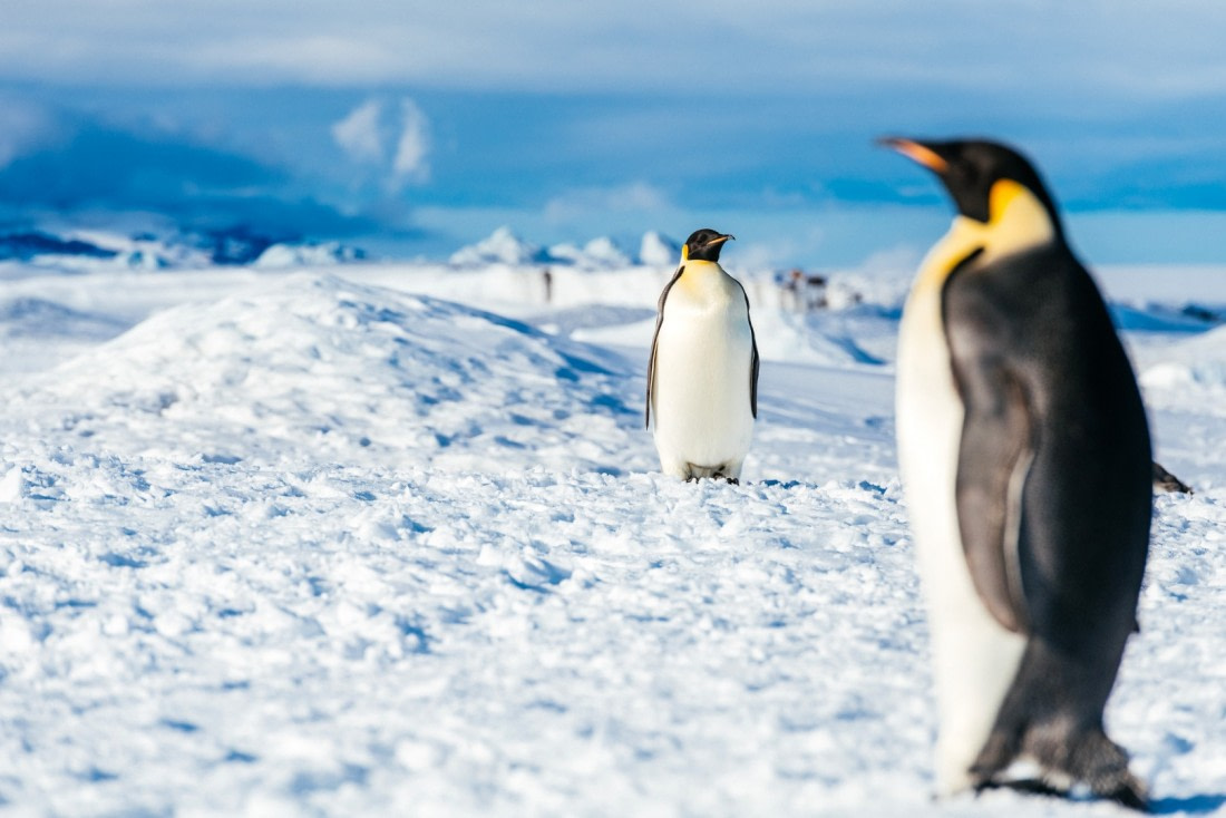 Watching the Emperor penguins on Snow Hill Island