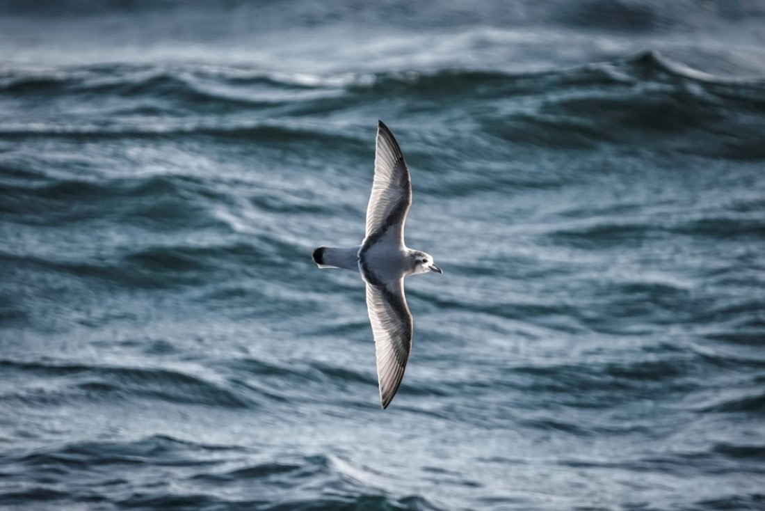 A prion in flight at sea