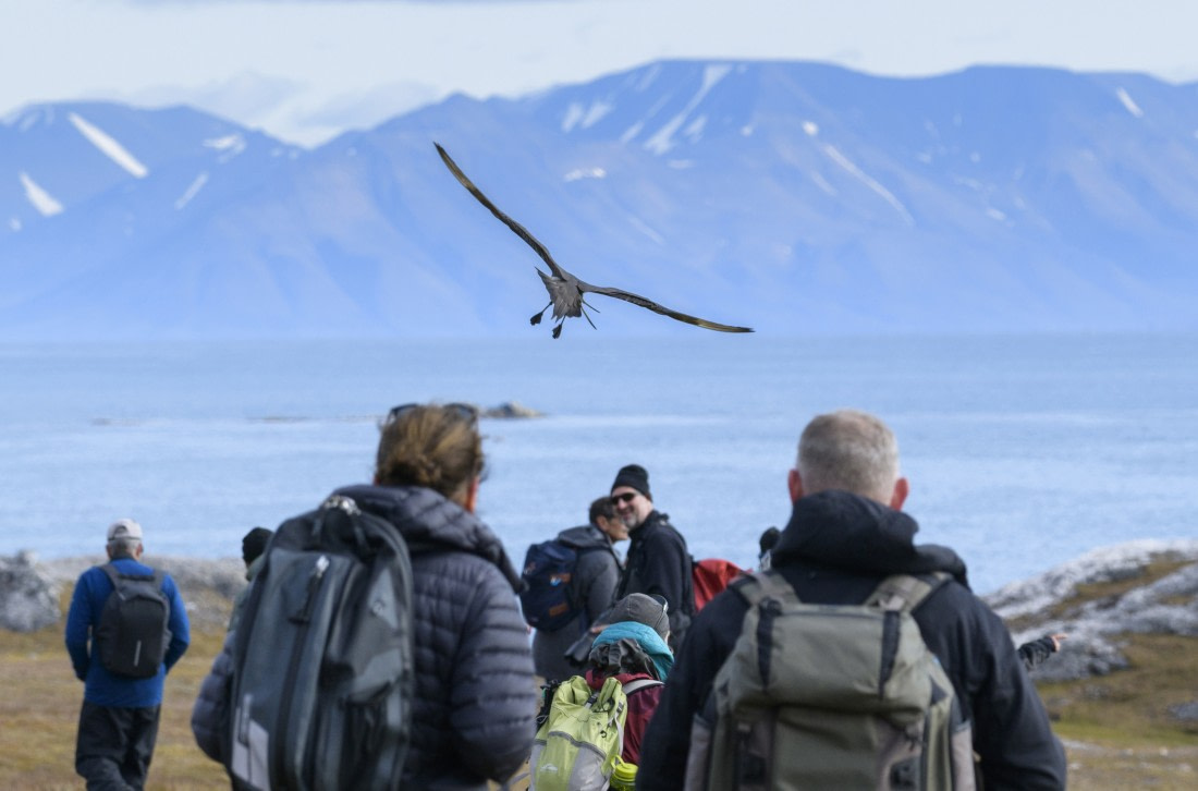 Passengers are watching birds in the Arctic