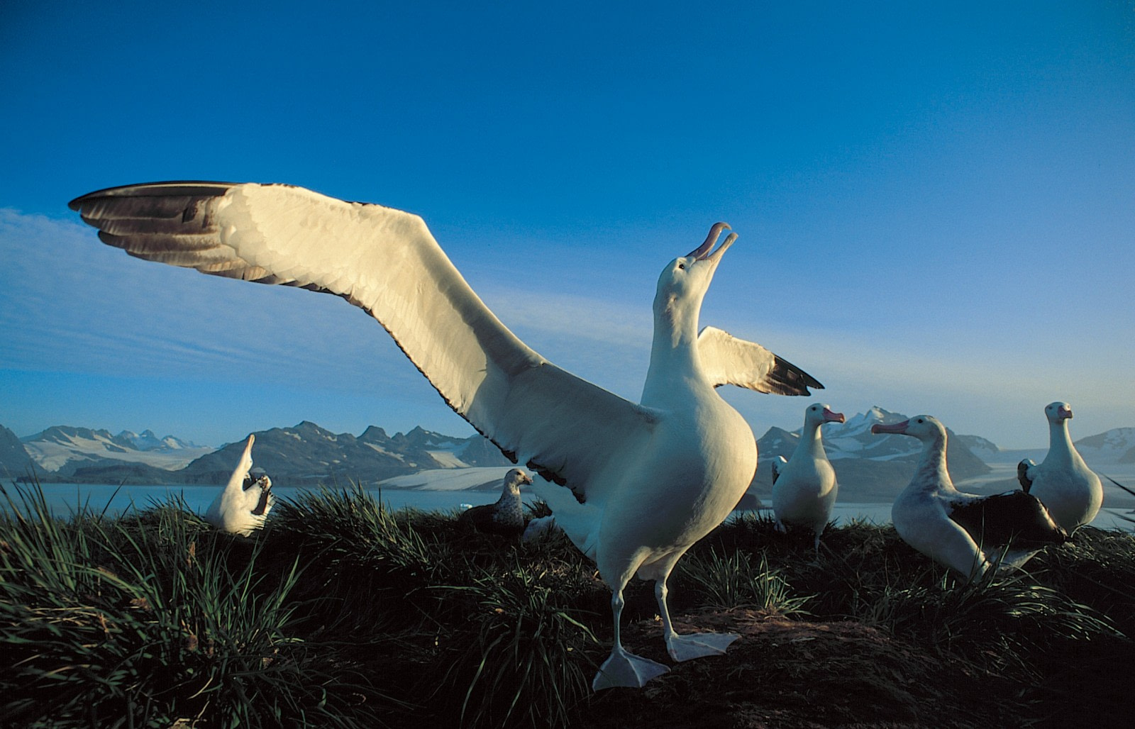 South Georgia, home to the Penguins and Albatrosses