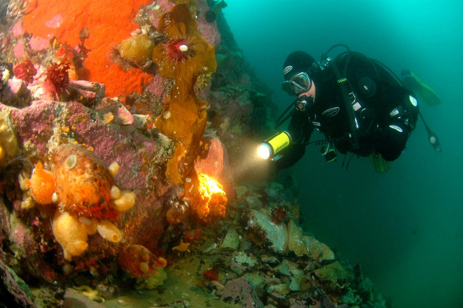 Diving in Antarctic waters