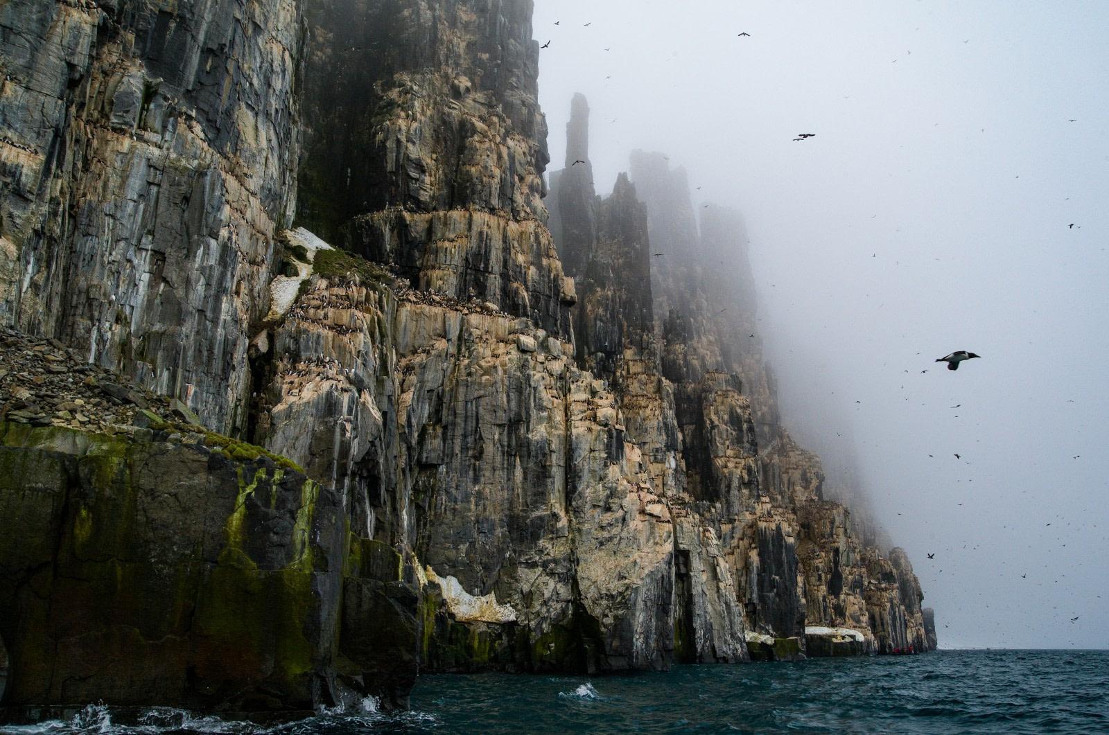 The Bird Cliffs of Alkefjellet