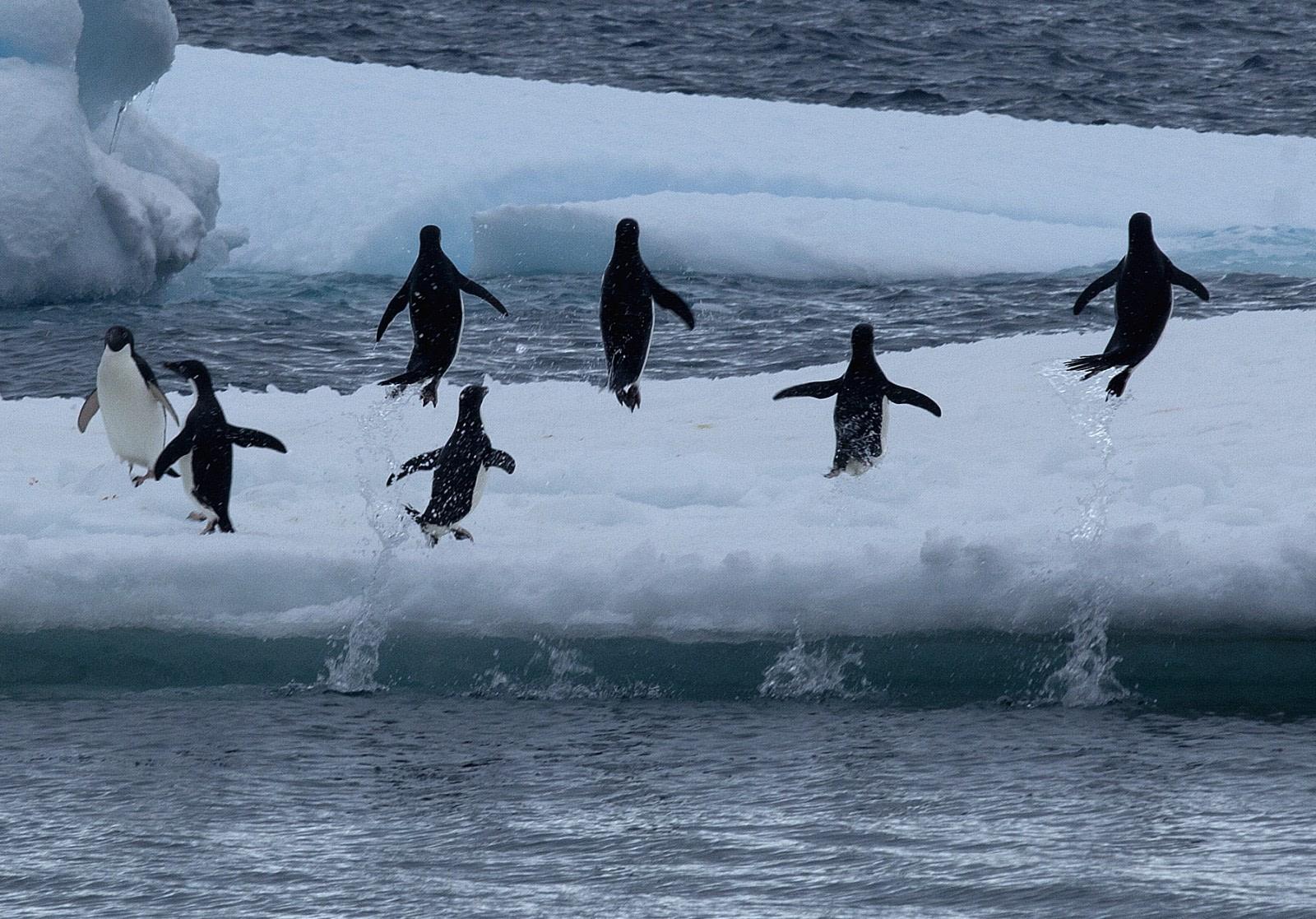 Adélie Penguins & the Weddell Sea