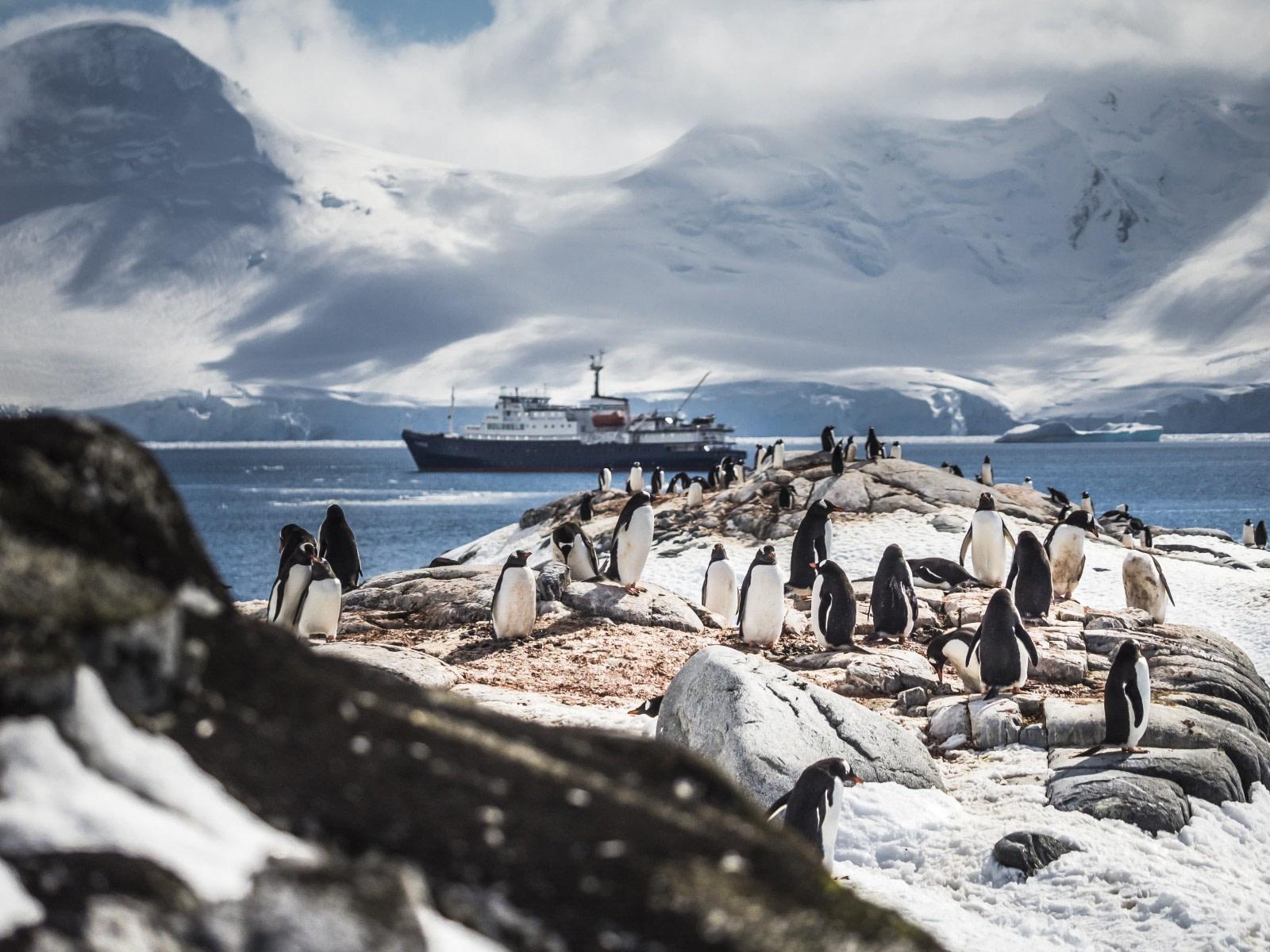 Antarctica, Gentoo Penguin © Dietmar Denger-Oceanwide Expeditions