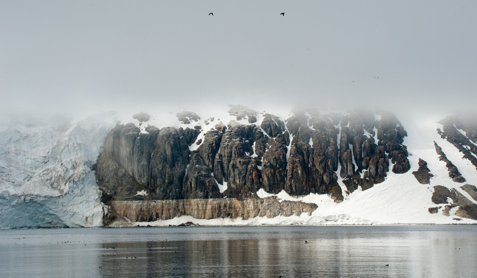 Spitsbergen, Bird Cliff, July © Erwin Vermeulen-Oceanwide Expeditions