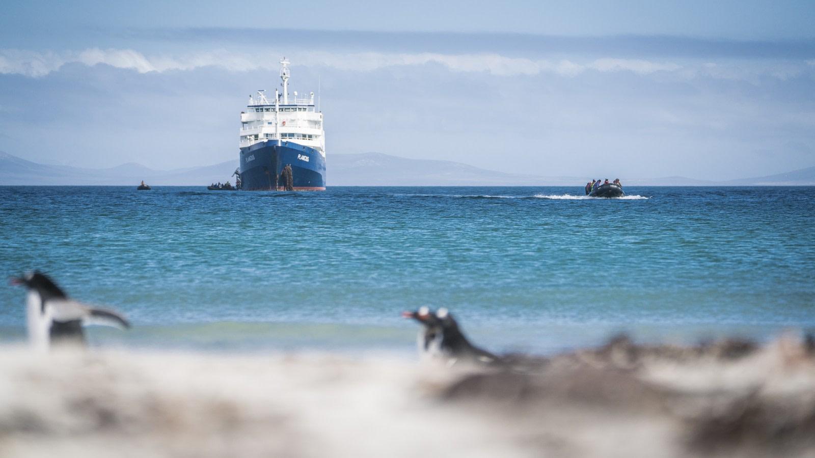 Falklands, South Georgia, Ant Peninsula © Fotografie Dietmar Denger-Oceanwide Expeditions20.jpg