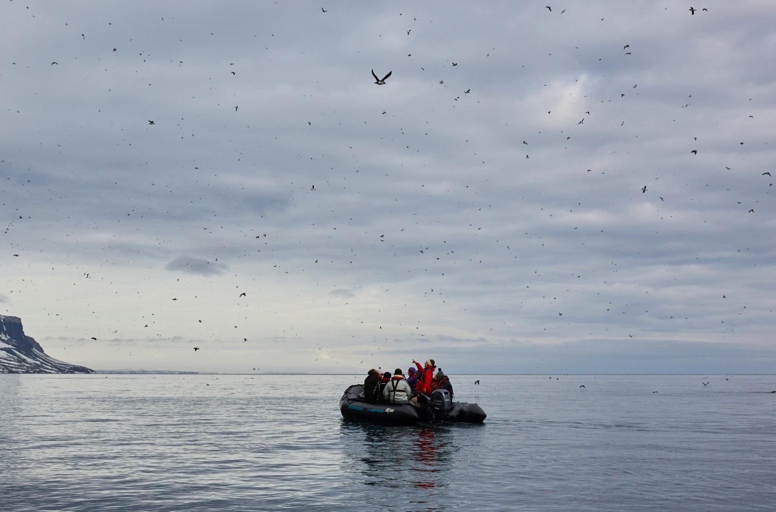 North Spitsbergen Polar Bear Special, June © Markus Eichenberger-Oceanwide Expeditions (104).jpg