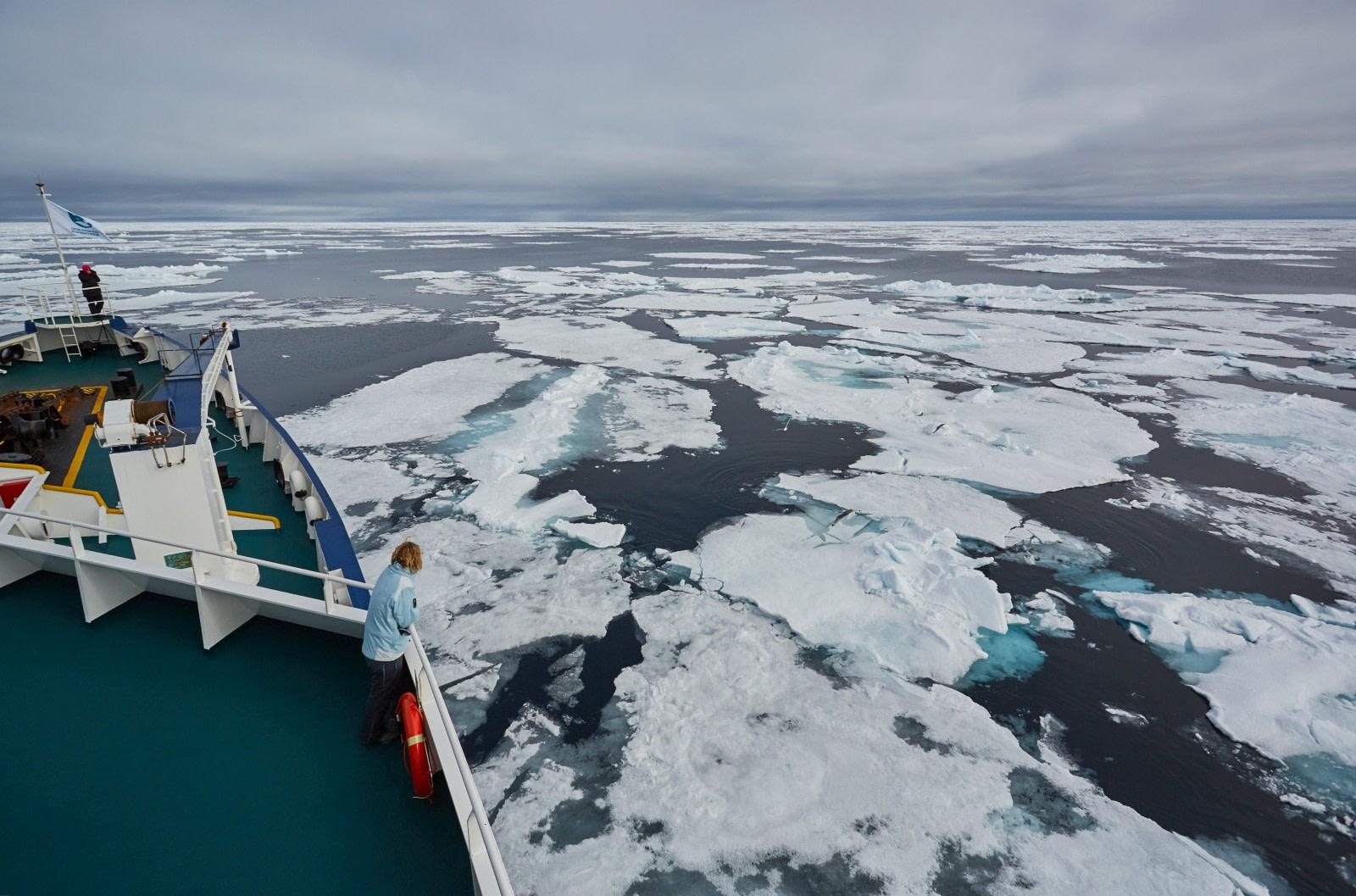 North Spitsbergen Polar Bear Special, June © Markus Eichenberger-Oceanwide Expeditions (66).jpg