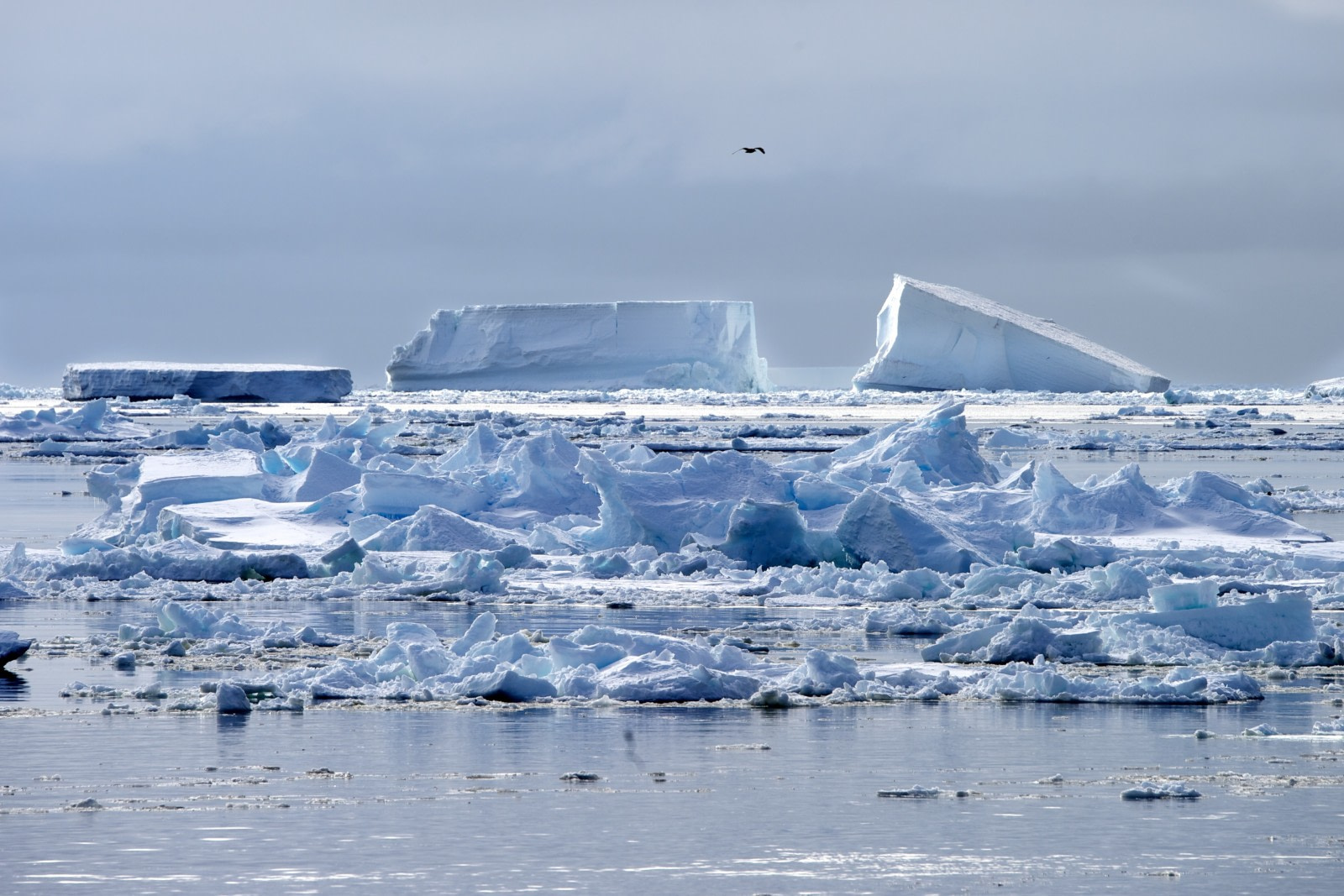 Ross Sea, Antarctica © Michael Martin-Oceanwide Expeditions (11).jpg