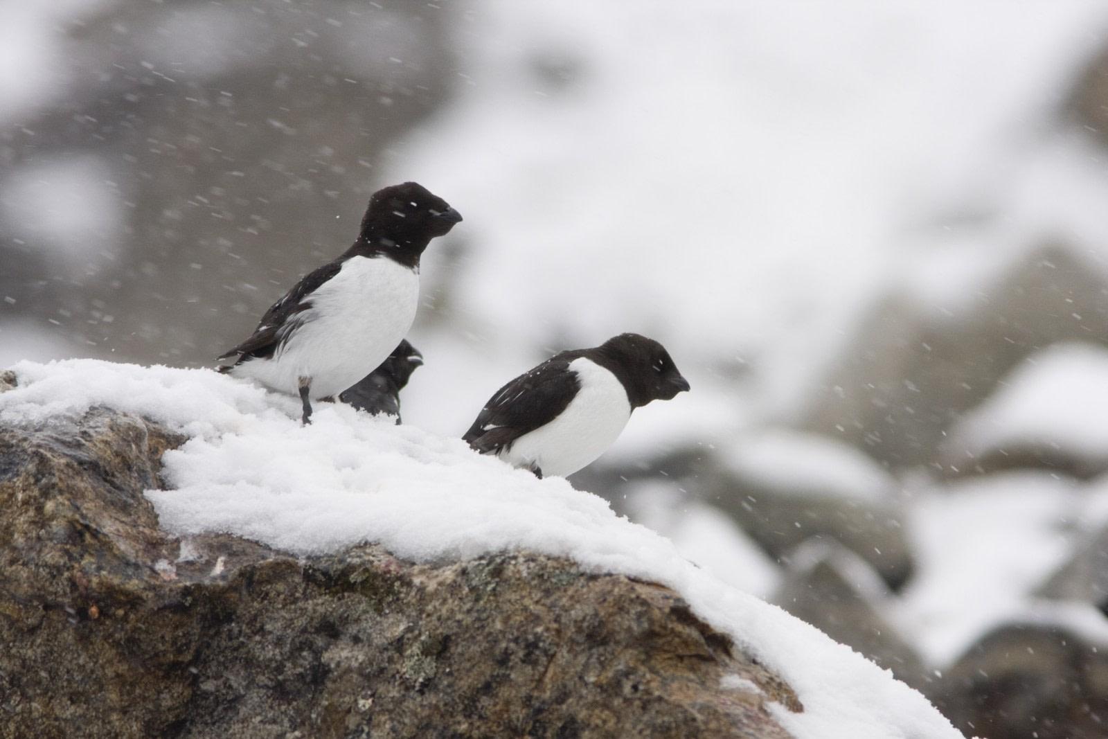 Fuglesangen