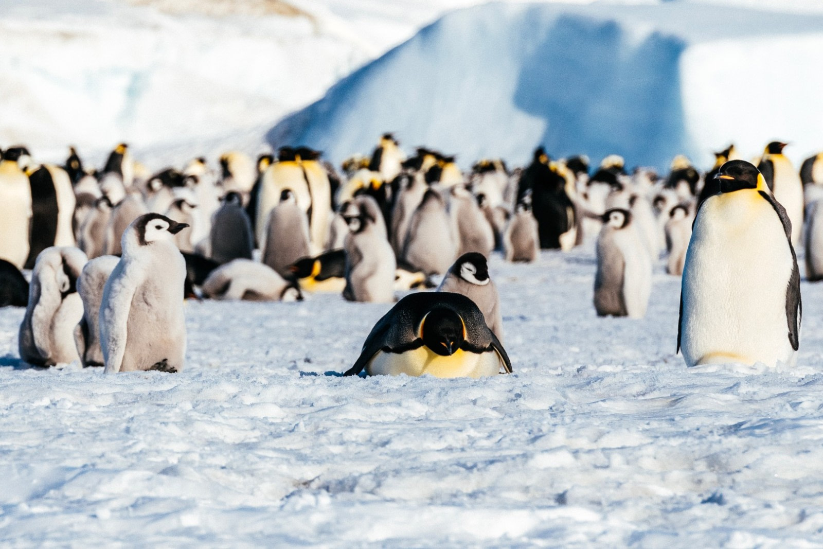 Emperor Penguins & the Weddell Sea