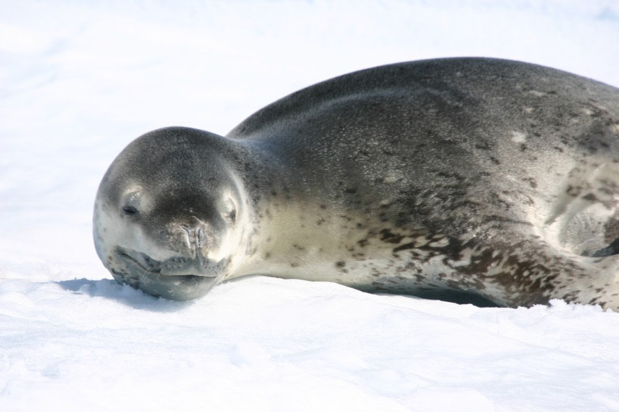 antarctica_paradise bay (c) M & M van der Hulst-Oceanwide Expeditions (65).JPG