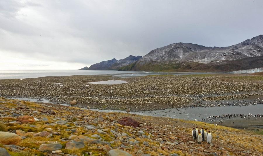 South Georgia landscape, St. Andrews Bay