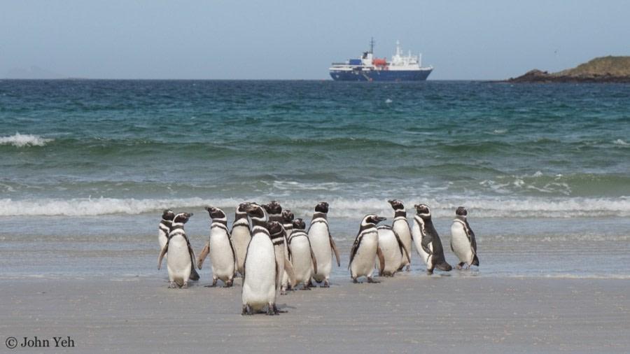 Falkland Islands: Carcass Island & Saunders Island