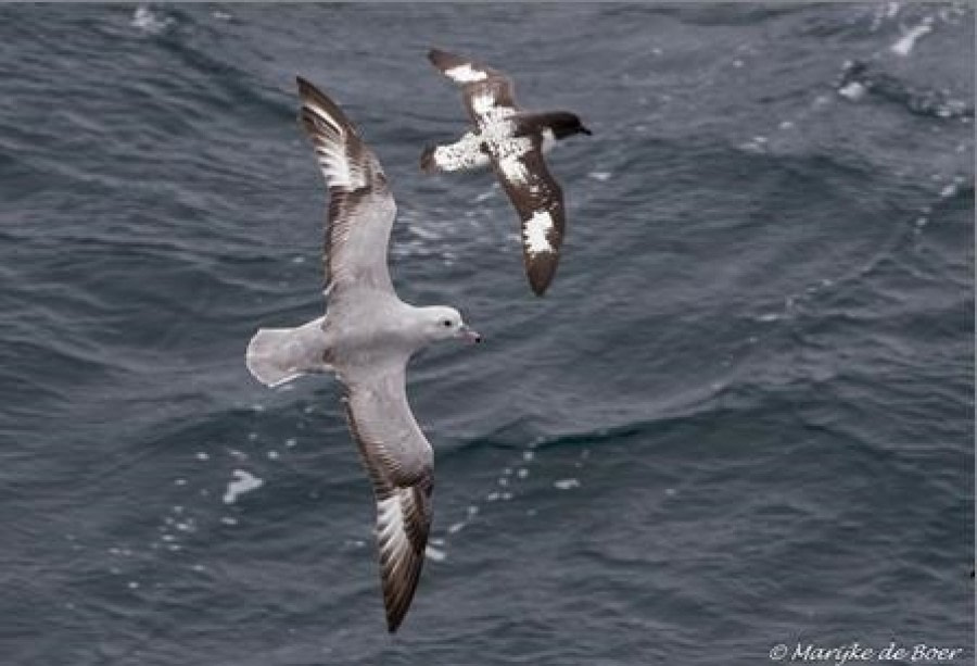 At sea in the Drake Passage