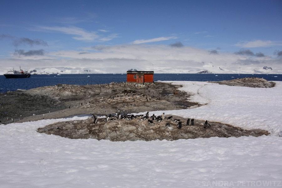 Antarctic Peninsula: Mikkelsen Harbour & Cierva Cove