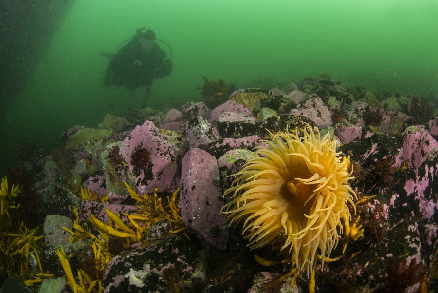 Wreck Governøren Diving Antarctica, Polar Diving