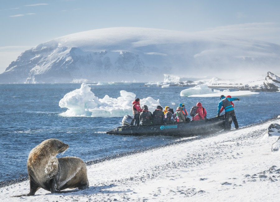 Zodiac landing on Brown Bluff, welcomed by a Fur seal © Dietmar Denger - Oceanwide Expeditions.jpg
