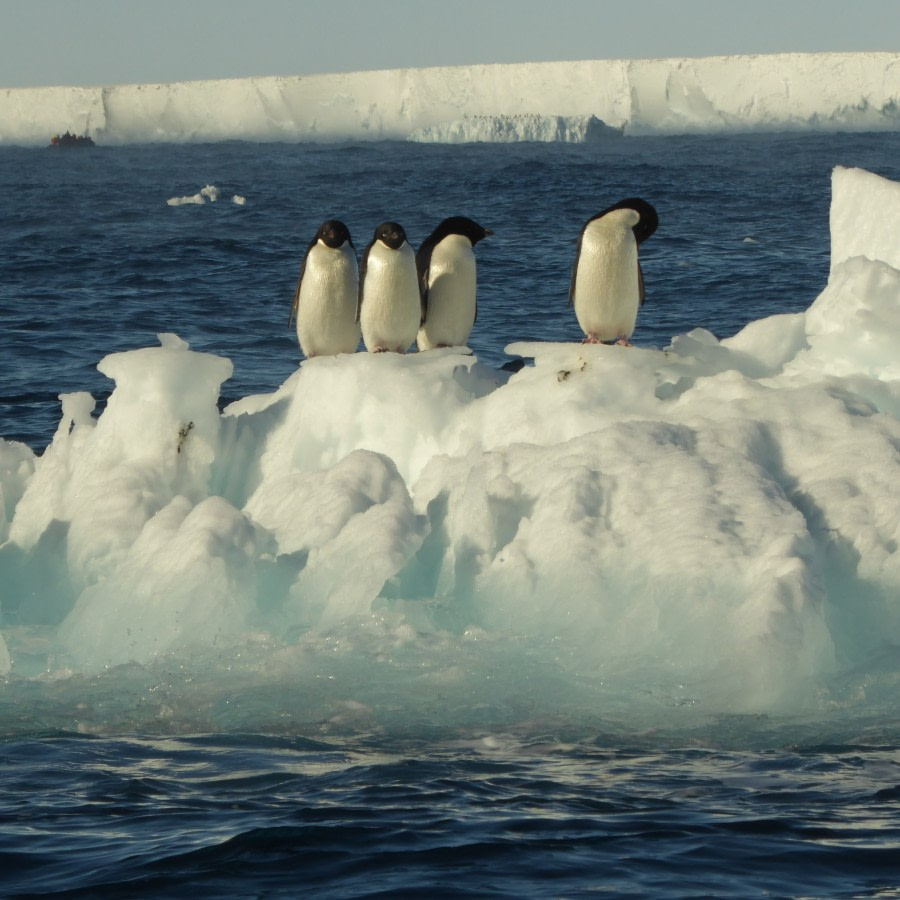Cape Crozier & along the Ross Ice Shelf