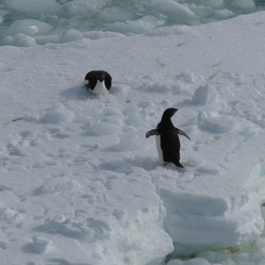 Cape Hallett, Ross Sea