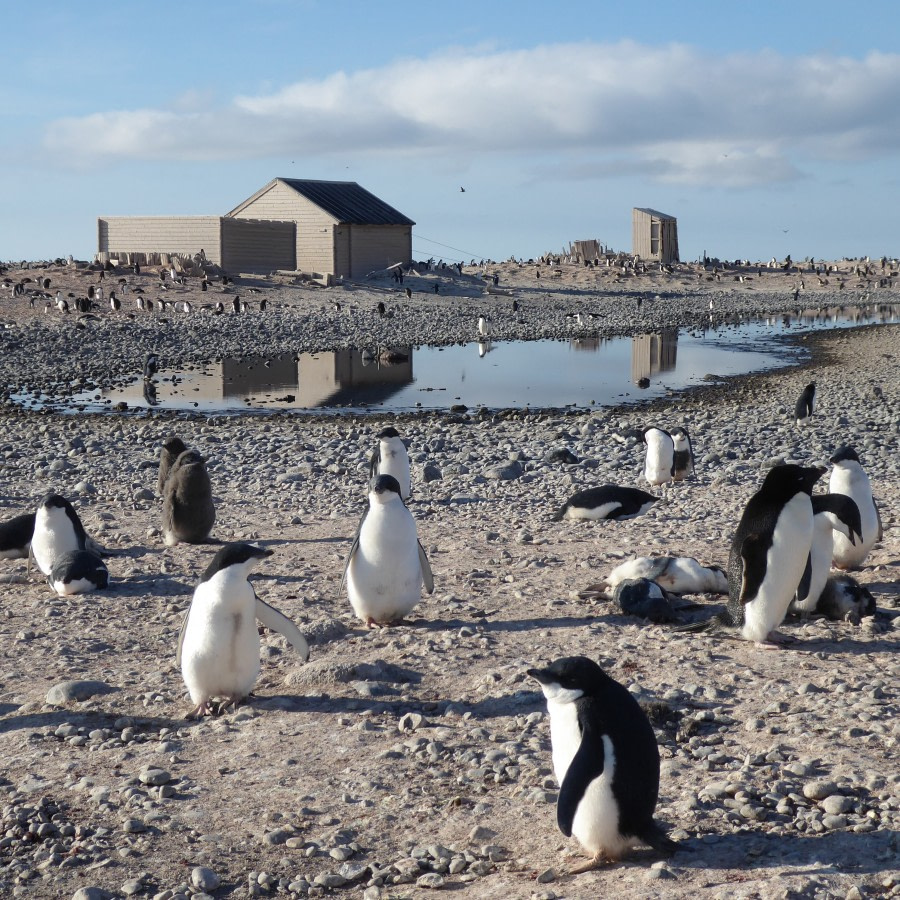 Possession Islands & Cape Adare, Ross Sea