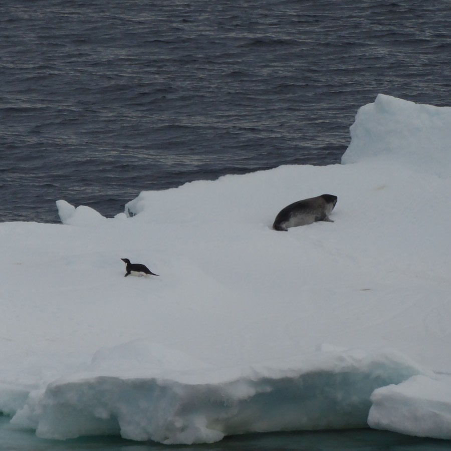 in the Ross Sea