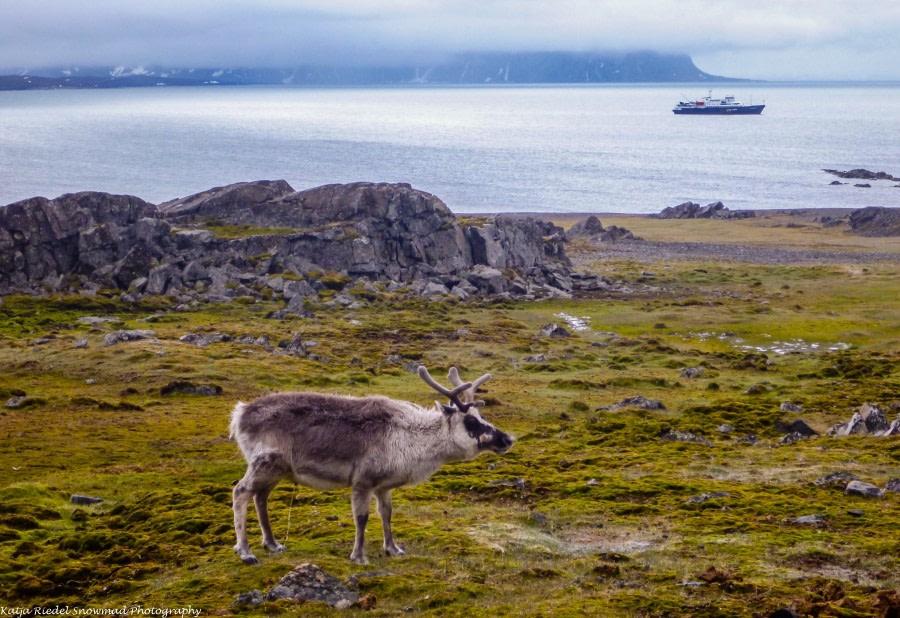 Ingeborgfjellet & Recherchefjord