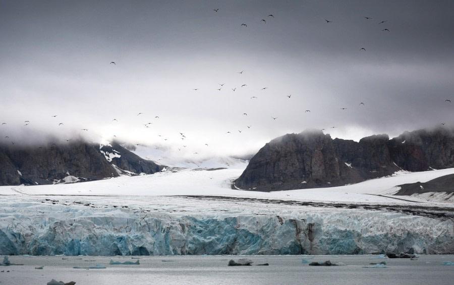 Kongsfjorden; 14th of July Glacier; Svalbard-aug2017-Geert_Kroes-002.jpg