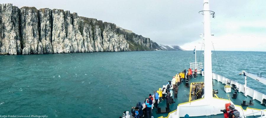 Dickschnabellummen am Alkefjellet, Wanderung bei Faksevågen, Walrosse bei Torellneset