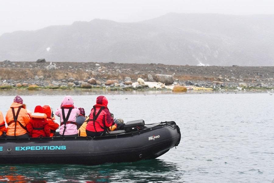 Danskoya; polar bear; sperm whale; carcas; Svalbard-aug2017-Geert_Kroes-017.jpg