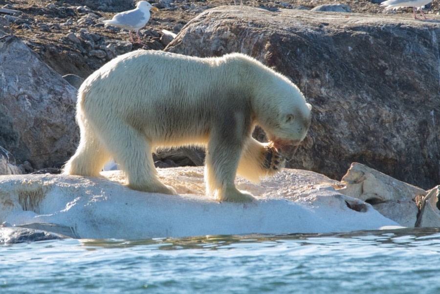 PLA11-17, Day 3, Round SpitsbergenSmeerenburgbär-Oceanwide Expeditions_bw.jpg