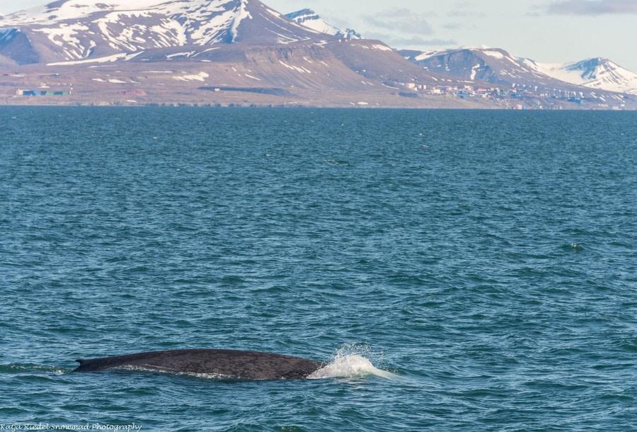 Isfjord: Billefjord & Skansbukta