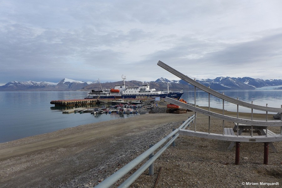 Ny Ålesund (Kongsfjord) und Eisbären auf Danskøya (Smeerenburgfjord)