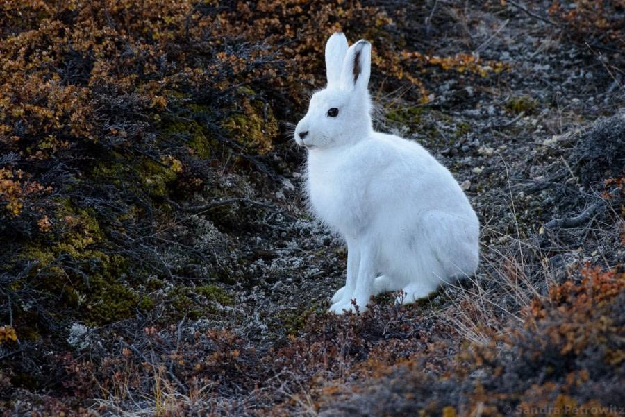 PLA15-17, Day 10 20170907_SandraPetrowitz_Bunny _Oceanwide Expeditions.jpg