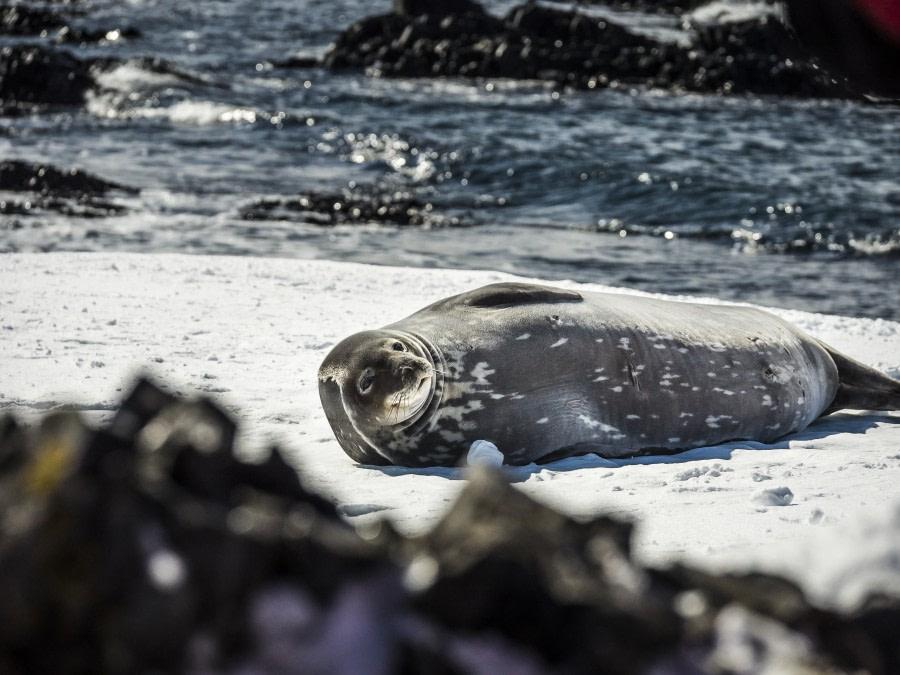 Antarktis_Dietmar Denger-111.JPG