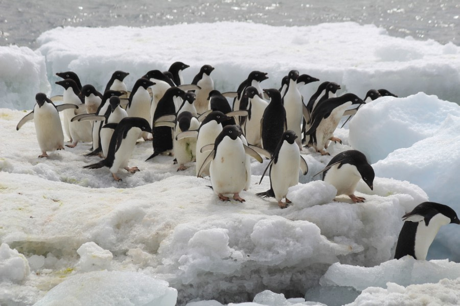 Brown Bluff and Antarctic Sound, Antarctica