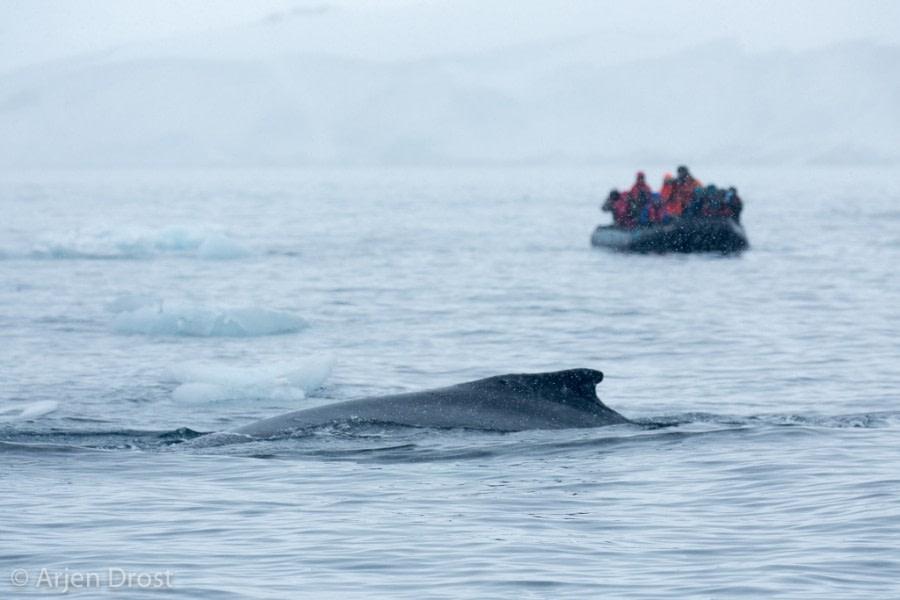 Kinnes Cove & Brown Bluff, Antarctic Sound,  Antarctic Peninsula