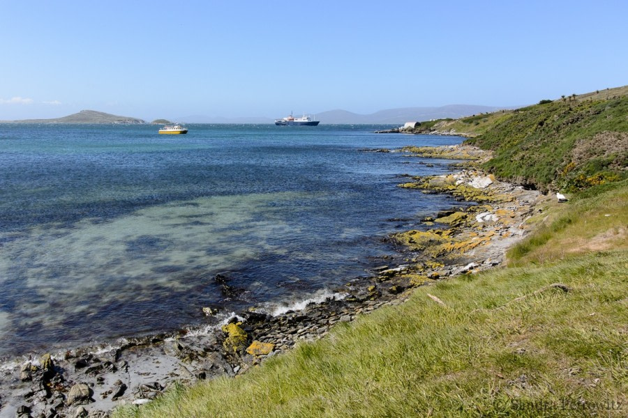 Carcass Island & Saunders Island, Falkland Islands
