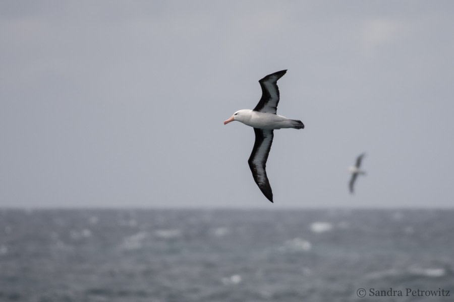 At Sea towards the Falkland Islands