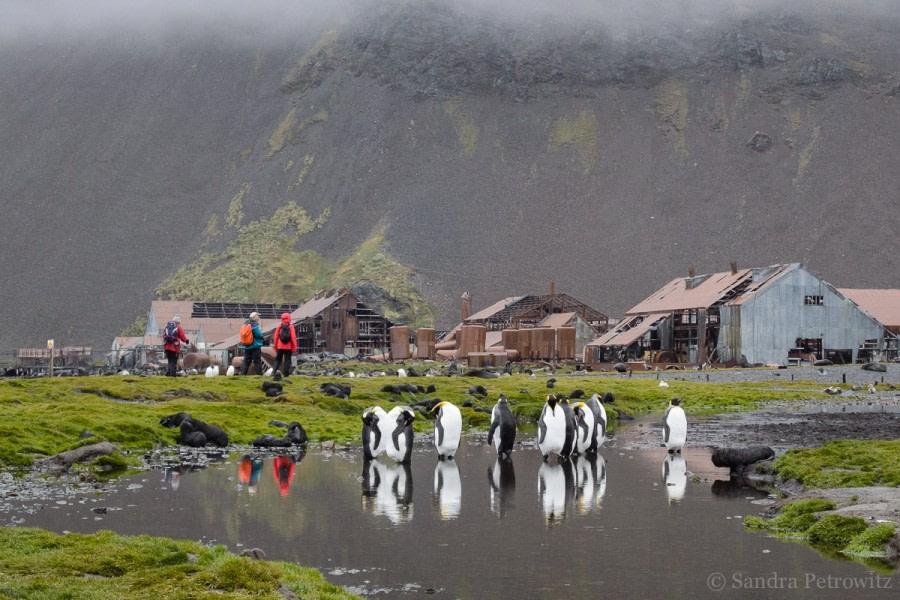 Grytviken & Stromness, South Georgia