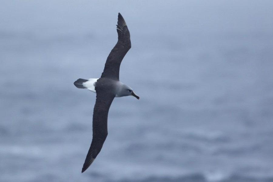 Drake Passage: At Sea towards Ushuaia