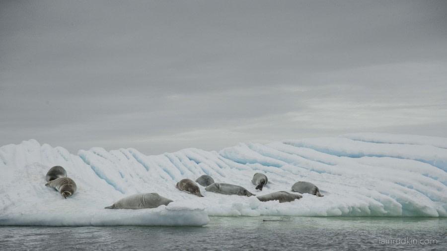 OTL31-18 Day 6 Iain_8Mar_ArgentineIslands © Oceanwide Expeditions.jpg