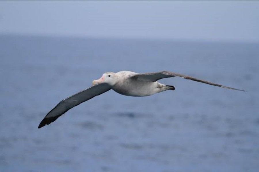 At Sea Sailing to the Falkland Islands