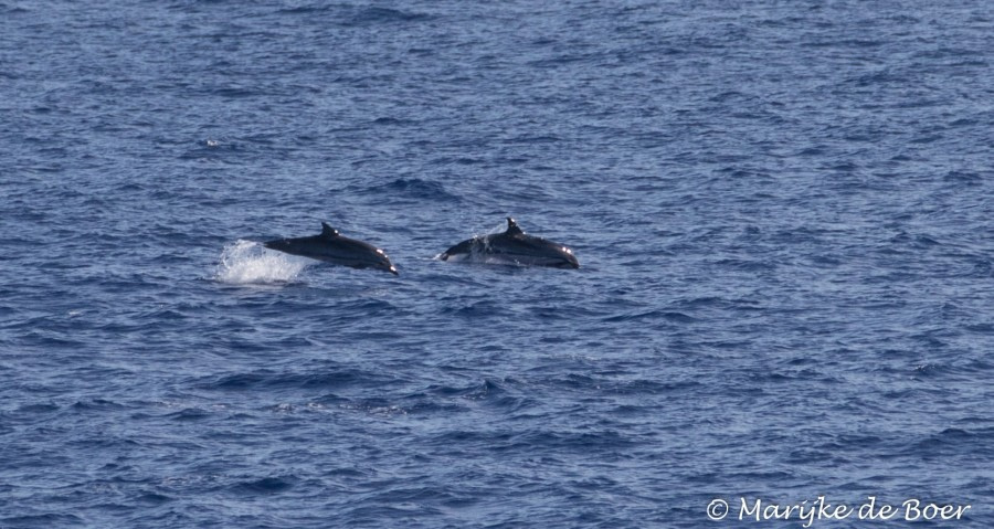 At Sea to Ascension Island