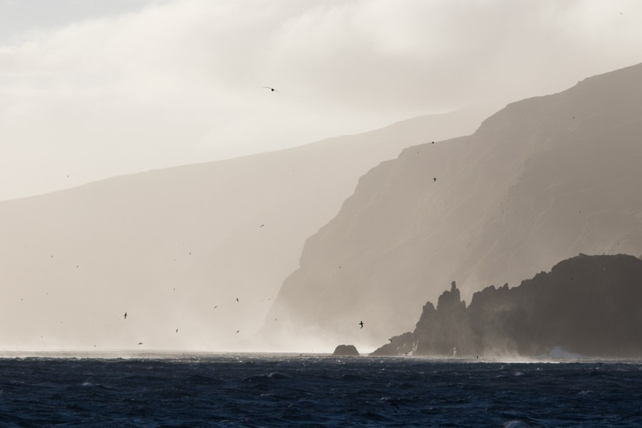 Arrival to Gough Island