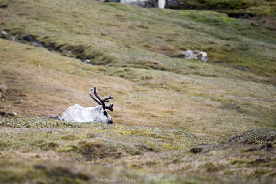 Isfjorden & last zodiac cruises