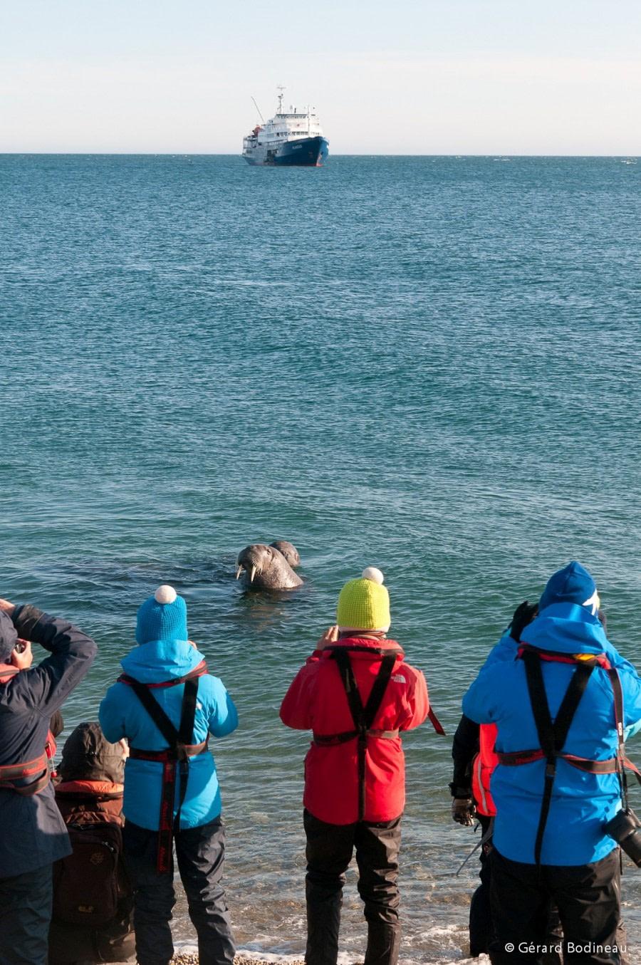 PLA13-18 Day03-05_Torellneset_WalrusAndPlancius_GerardBodineau-Oceanwide Expeditions.jpg