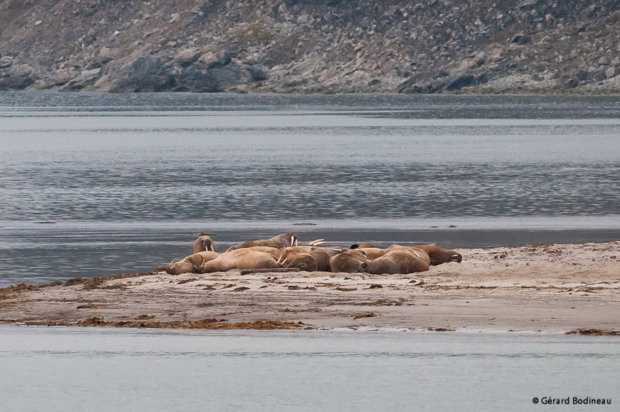 Raudfjord: Alicehamna & Hamiltonbukta