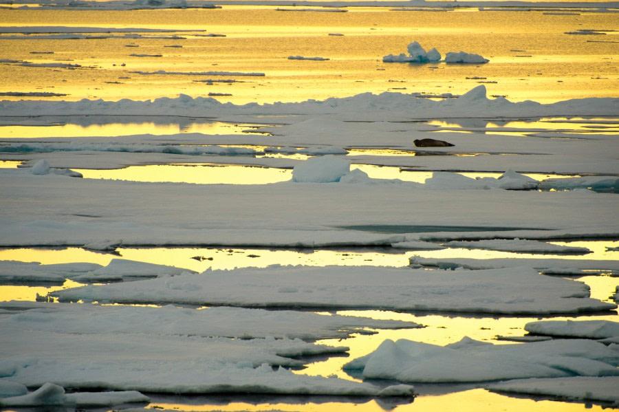 Around Spitsbergen, Kvitoya, August © Zoutfotografie-Oceanwide Expeditions (136) - kopie.JPG