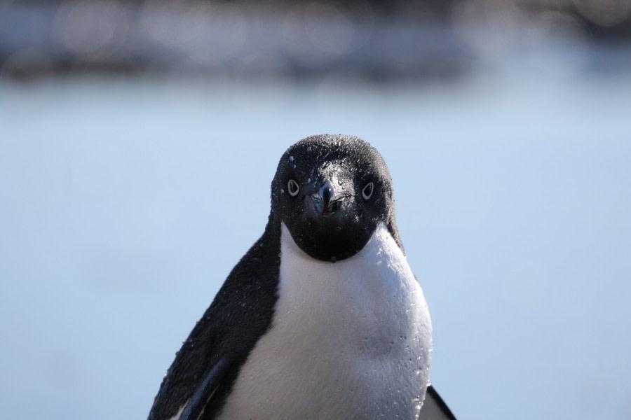 Brown Bluff & Antarctic Sound, Antarctic Peninsula